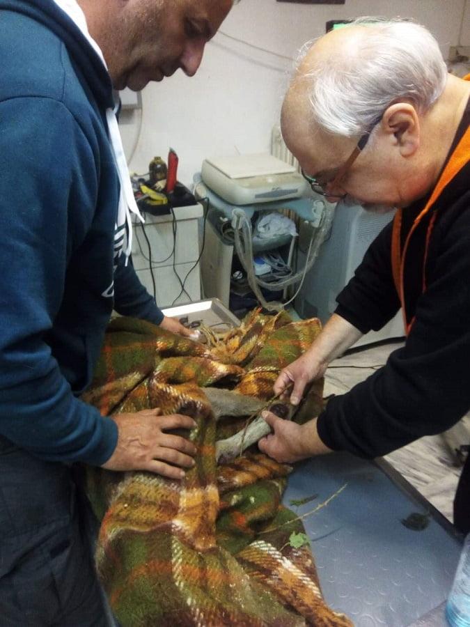 Έσωσαν τραυματισμένο ζαρκάδι στην Ξάνθη (φωτο) , φωτογραφία-1