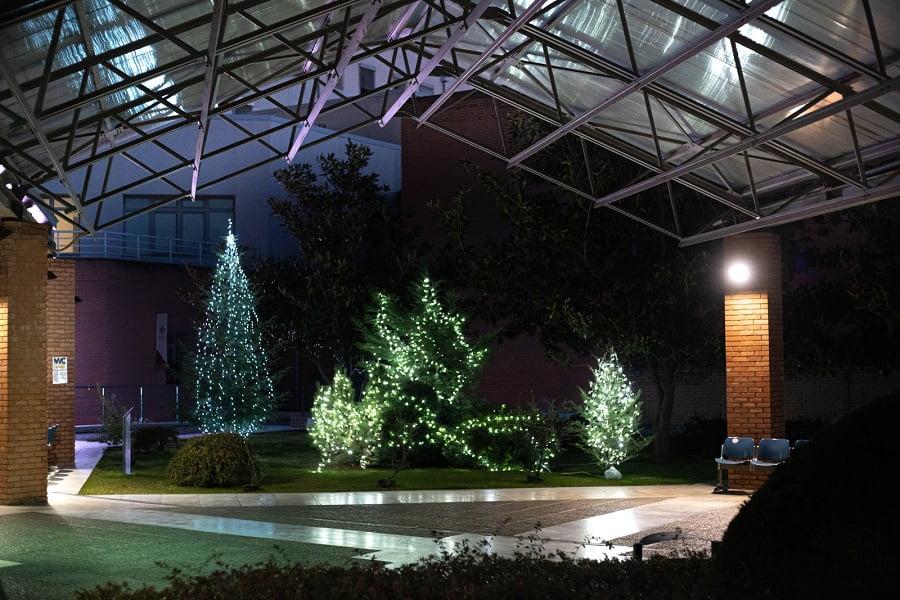 """Θεσσαλονίκη: Εντυπωσιακός ο χριστουγεννιάτικος διάκοσμος στο """"Παπαγεωργίου"""" – Δωρεές ελάτων και στολιδιών (φωτο), φωτογραφία-2"""