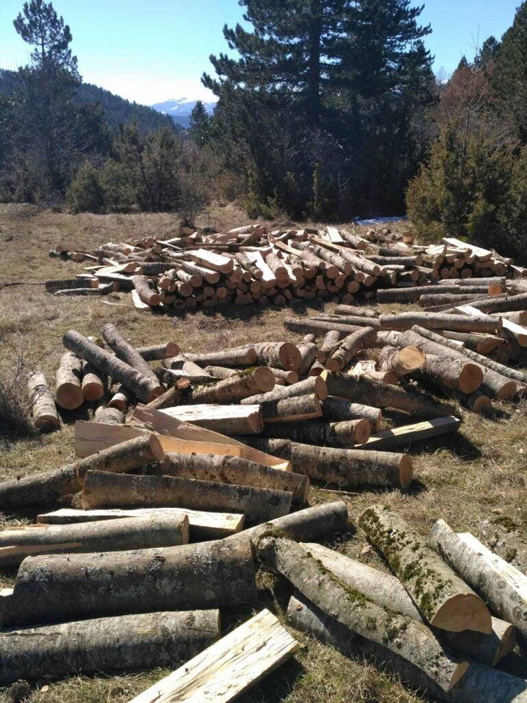 Καστοριά: 25χρονος αλλοδαπός έκοψε παράνομα 20 τόνους ξύλα (φωτο), φωτογραφία-1